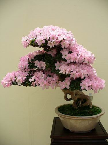 Bonsai Trees Page 7 My Hindi Forum