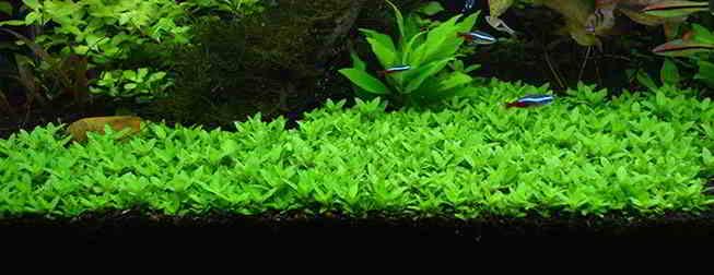 How To Aquascape Freshwater Aquarium