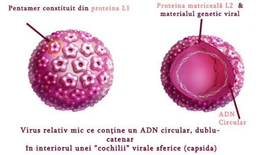 Penyakit Condyloma