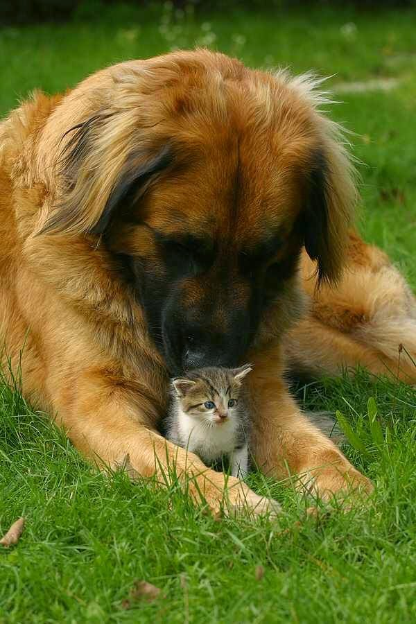 Cute Dogs And His friends Baby Cat