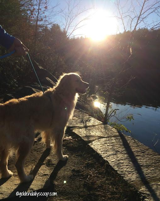 November sunshine at the dog park