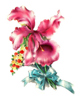 flower orchid image digital bouquet clip art