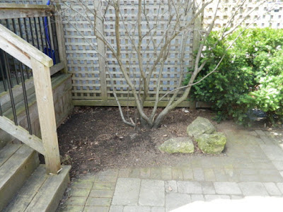 Roncesvalles Toronto spring garden cleanup after Paul Jung Gardening Services