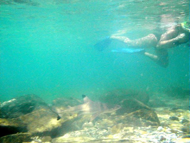 Shark watch snorkeling on Long Beach, Koh Phi Phi