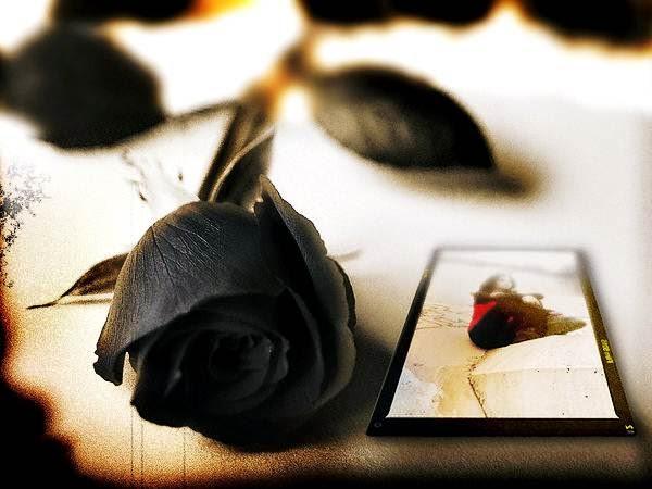 Gambar Wallpaper Bunga Mawar Hitam Cantik