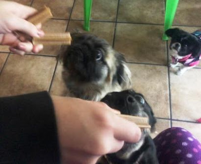 Dogs with dentastix in mouth