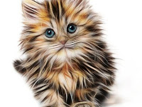 Ini Tentang Kucing yang perlu Diketahui