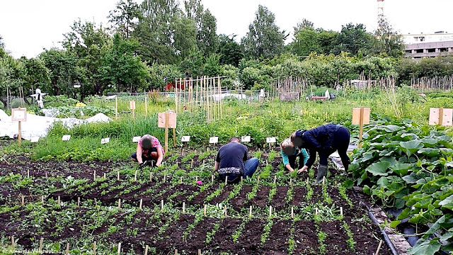 Urban green living and farming in Oslo, Norway