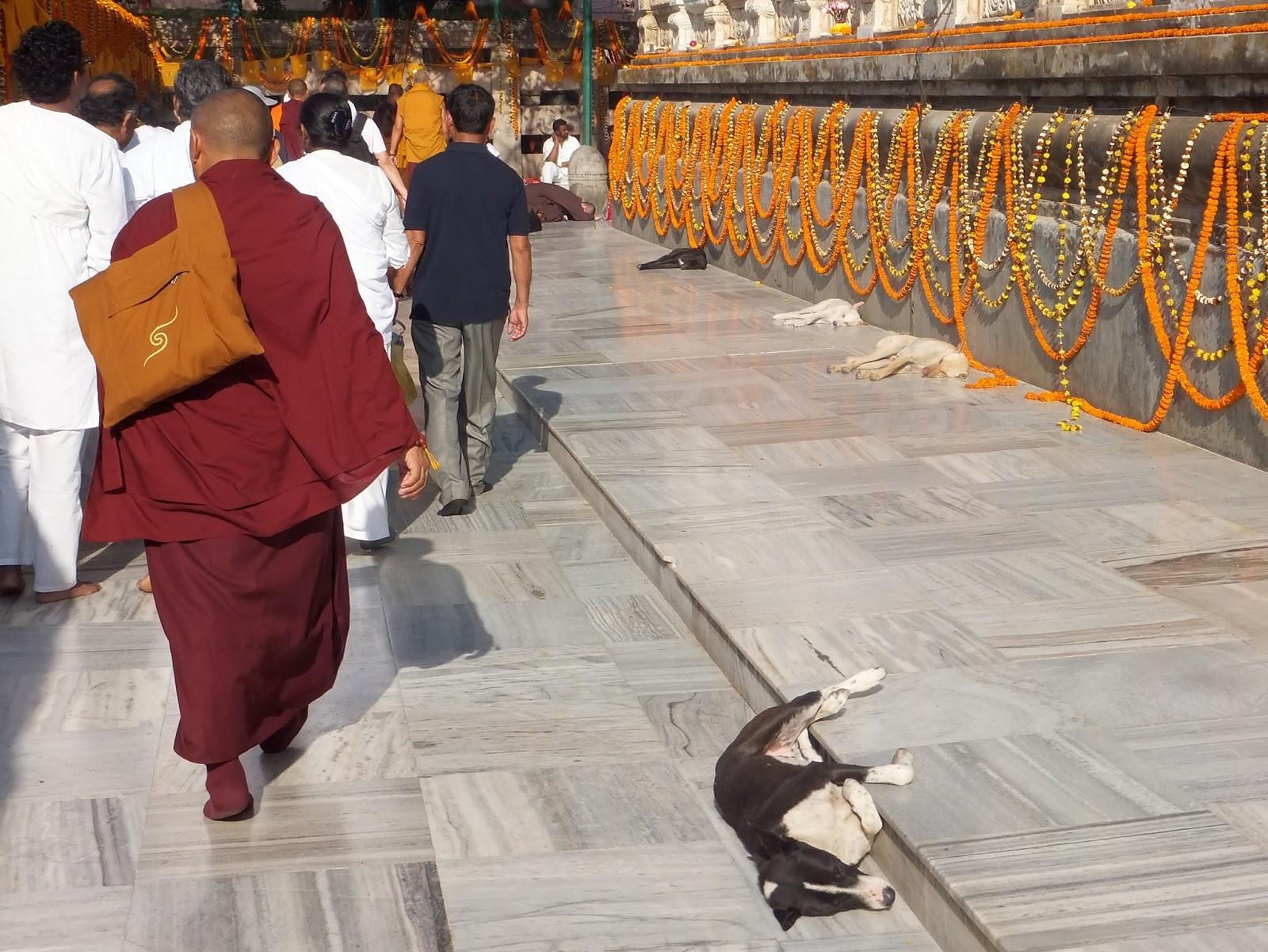 монахи и паломники делают кору вокруг храма