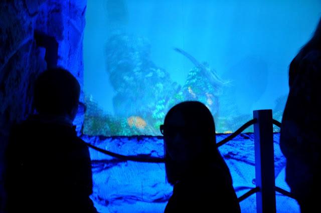 jurapark, bałtów, oceanarium