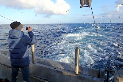 Pescaturismo Mallorca Avistamiento de aves en las excursiones