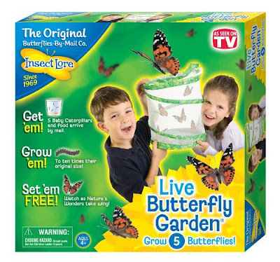 Insect Theme Homeschool Preschool