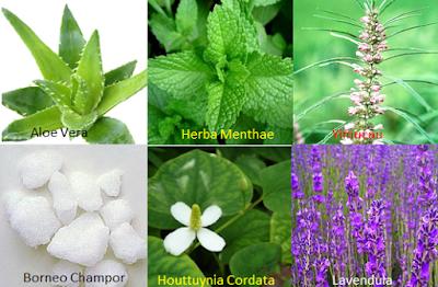 Herbal Hibis - www.infojagakesehatan.blogspot.com - isman
