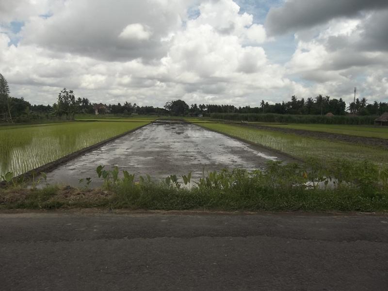 Tanah di jual sekitaran Rs. PKU gamping / Perumahan ...