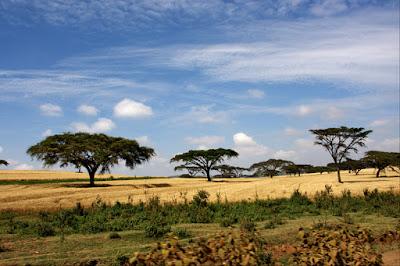 Perbedaan Bioma Sabana dan Stepa