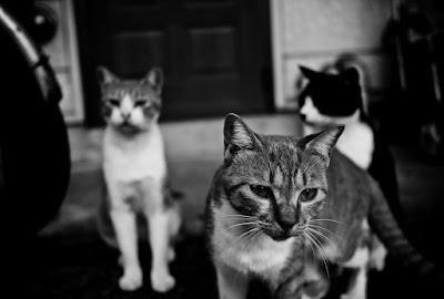 猫_神話_ケット・シー2