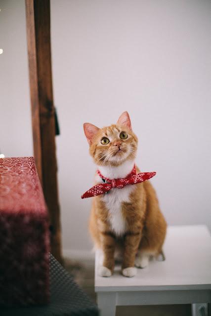 cat looking upword image