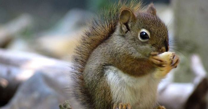Squirrel funny and interesting new images photos funny - Funny squirrel backgrounds ...