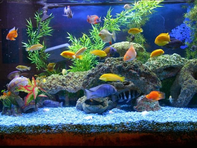Selain Warnanya yang Indah, Benarkah Ikan Hias Juga Membawa Keberuntungan?