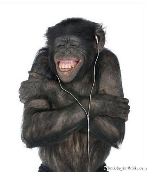 Khỉ nghe nhạc