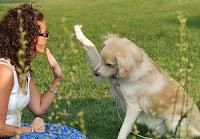 10 Cara Sederhana Untuk Menghadirkan Kebahagiaan - Bermain secara teratur dengan hewan peliharaan