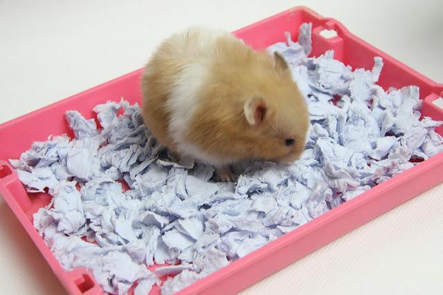 Alas Kandang yang Baik untuk Hamster