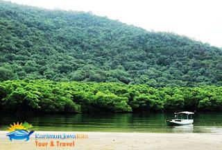mangrove legon lele karimunjawa