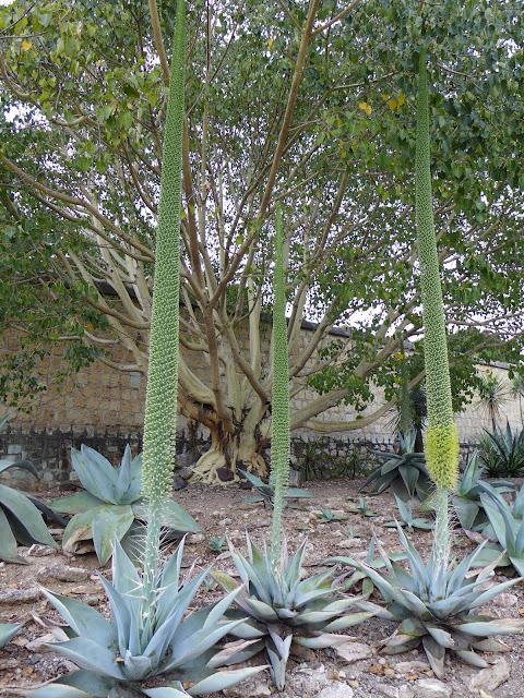 Jardin Etnobotánico de Oaxaca