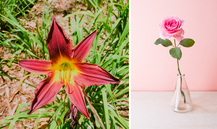 single pink rose in vase