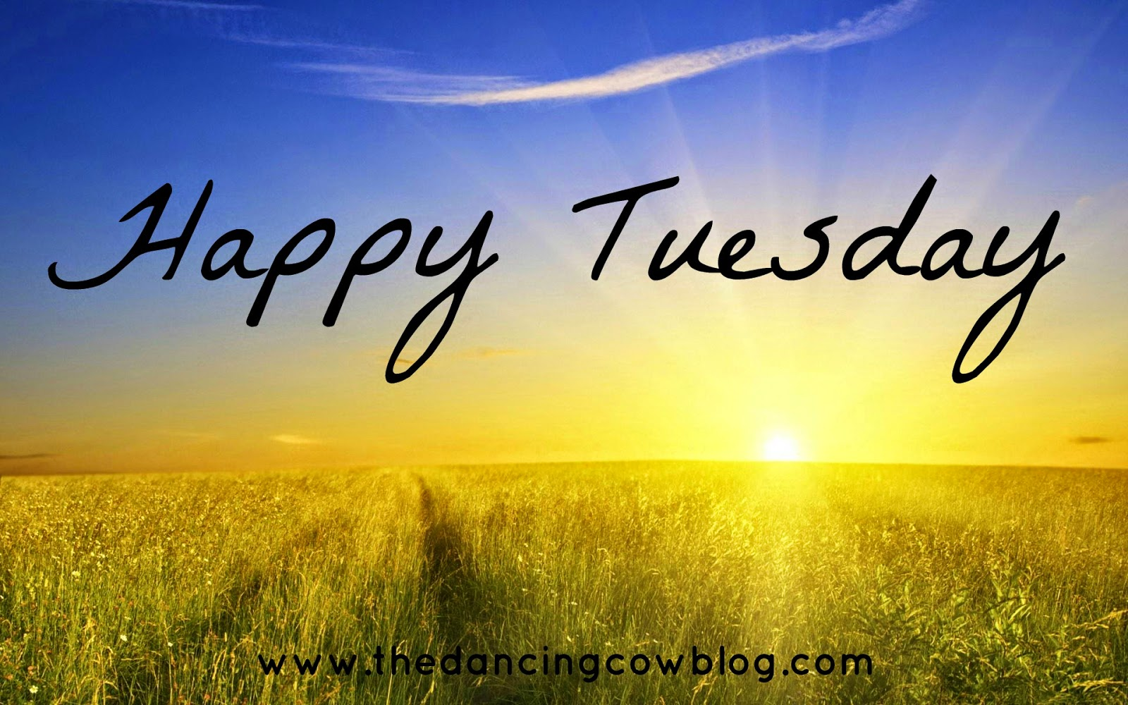 Image Gallery happy tuesday