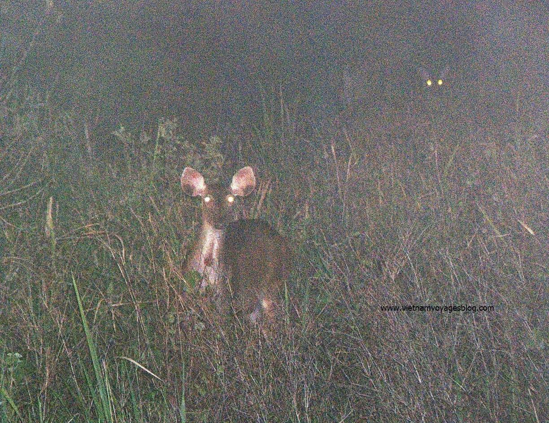 Ngắm thú đêm trong rừng Nam Cát Tiên
