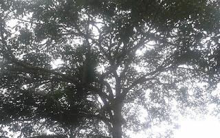 Julgamento da Constitucionalidade do Código Florestal no STF