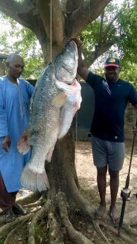 giant fish ibadan oyo state