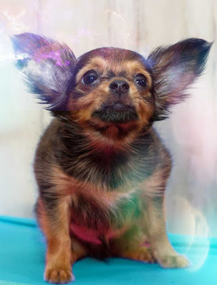imagene de perros, imagen de perros, imagenes de personas con perros, imagenes de perros con frases chistosas, imágenes de perritos
