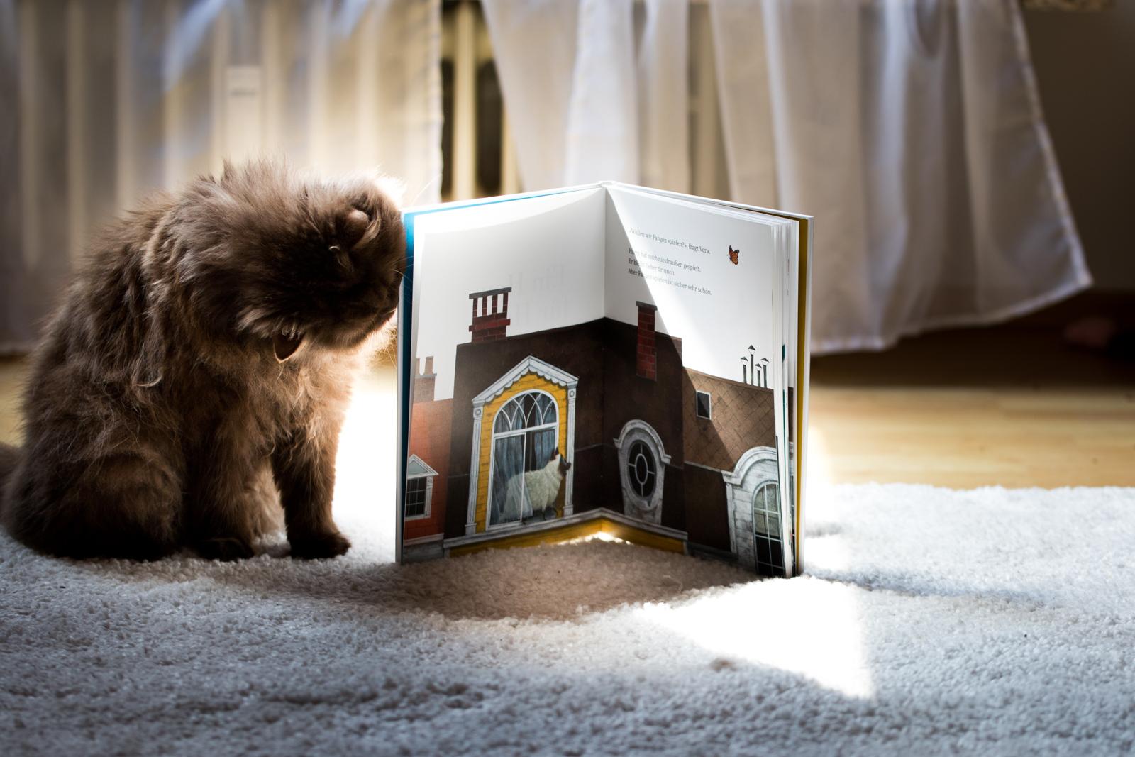 Leo Timmers, EIn Haus für Harry, Fotografie, Katzen, Britisch Kurzhaar