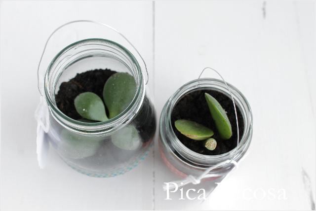 tutorial-hacer-regalo-companeros-colegio-cumpleanos-planta-en-bote-cristal-con-asa-alambre-diy