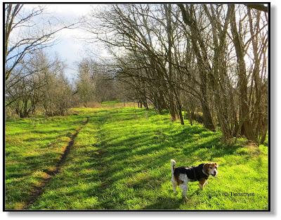 ein sonniger Spaziergang zur Faschingszeit
