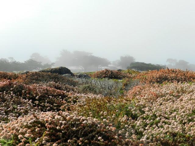 17 mile drive in Monterey California