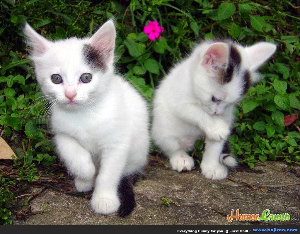 Mardianah Ajjaaa Kucing Imuet