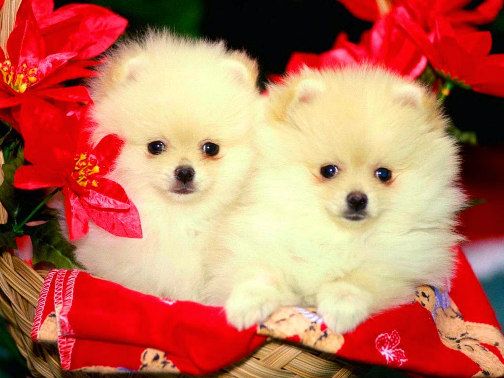 Cute Puppies and Dogs Images ~ Allfreshwallpaper