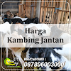 Harga Kambing Jantan di Surabaya Hub 087806003000