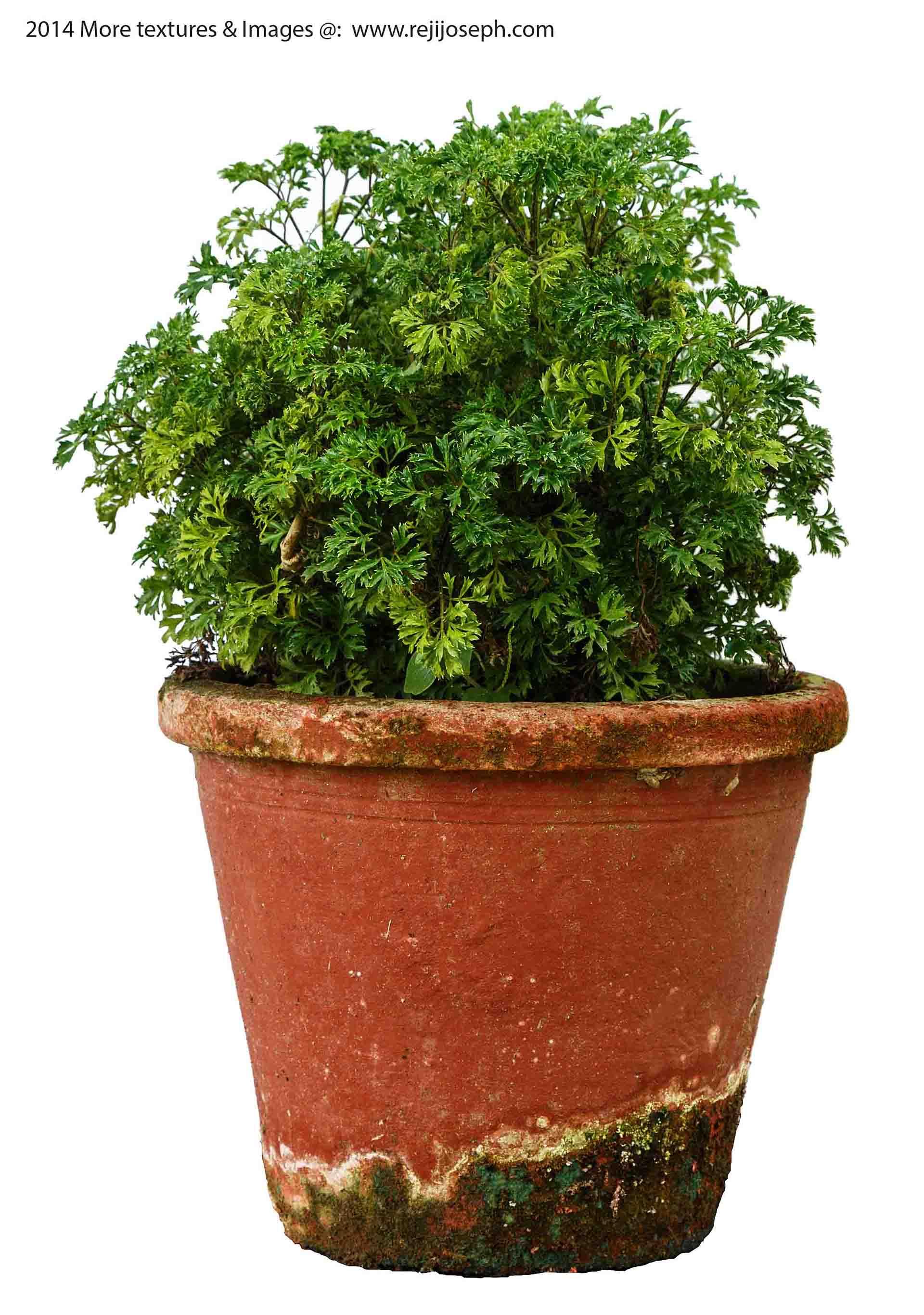 Garden Plant texture 00010