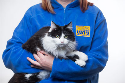 Cats Protection black and white cat