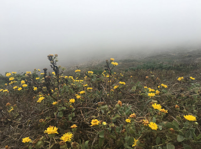 Point Reyes Fog, by Rachel Medanic