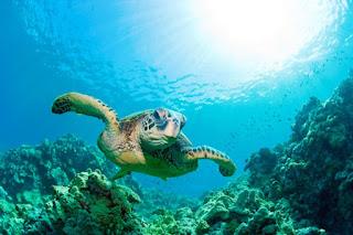 Zona Batial, Ikan, Flora Fauna Batial, Ekosistem