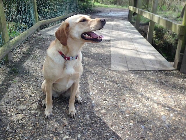 Tin Box Dog sitting in front of a bridge with a grin on her face