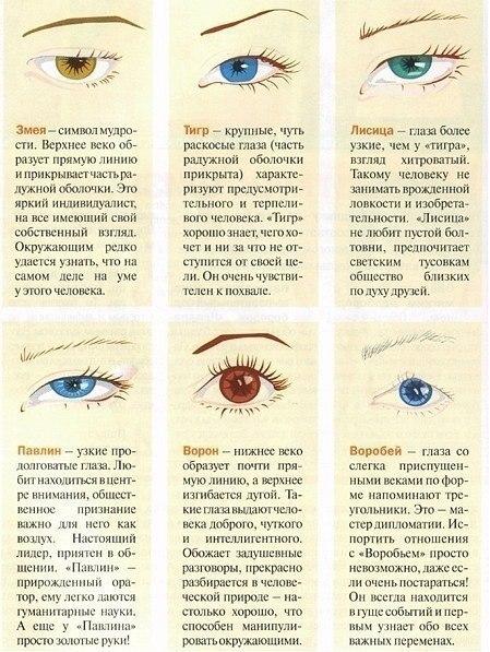 как по форме глаз определить характер