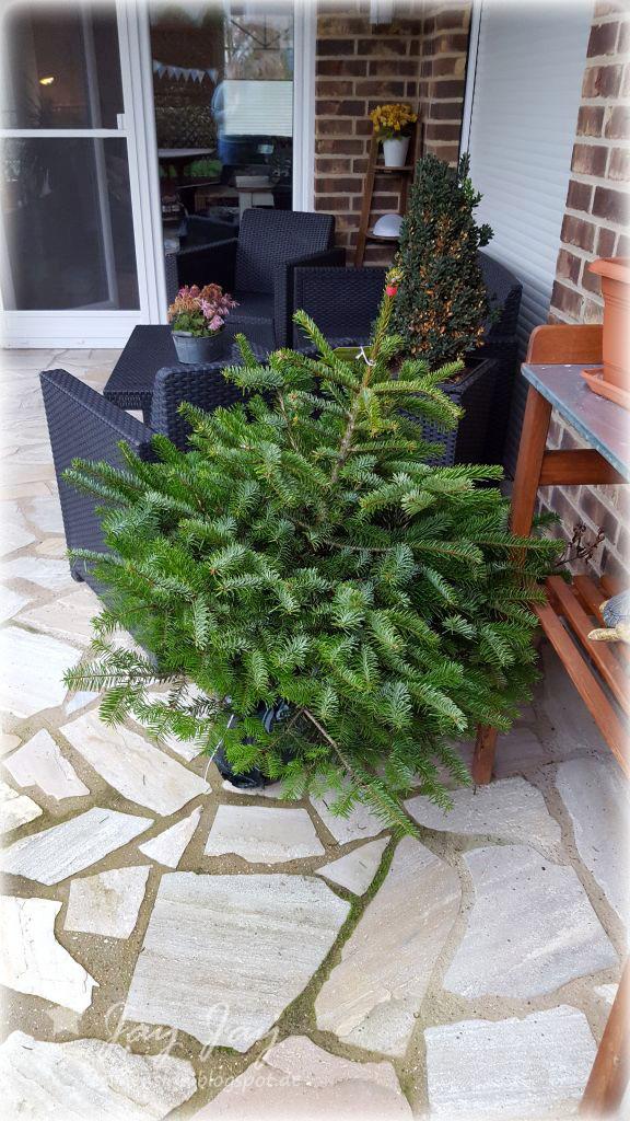 Sternensinn garten und mehr unser weihnachtsbaum - Weihnachtsbaum obi ...