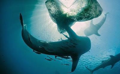 https://bio-orbis.blogspot.com/2014/05/acordo-com-tubaroes.html