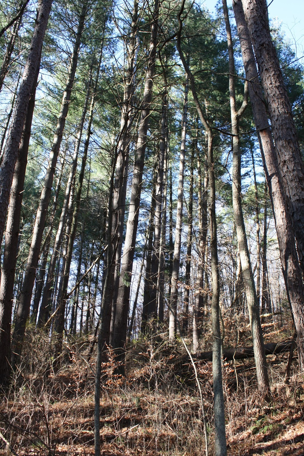 A Little Time and a Keyboard: A Taste of Hoosier National Forest